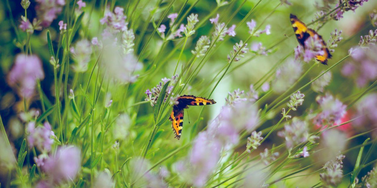 Organic Gardening – Helpful Tips For Beginner Gardeners